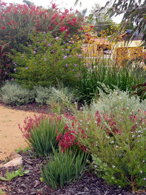 Australian native garden on pinterest australian garden for Native garden designs